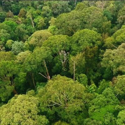 So, da sind ganz viele verschiedene Bäume