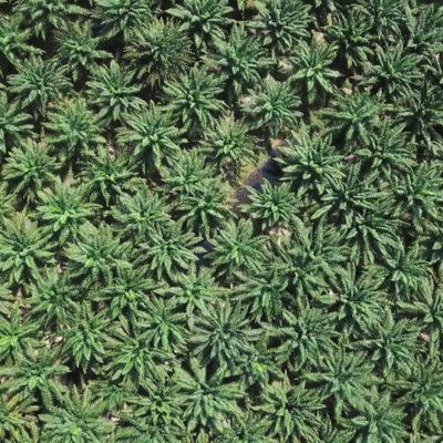 So, da gibt es nur eine Pflanze