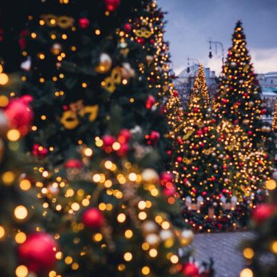 So wie unsere Weihnachtsbäume